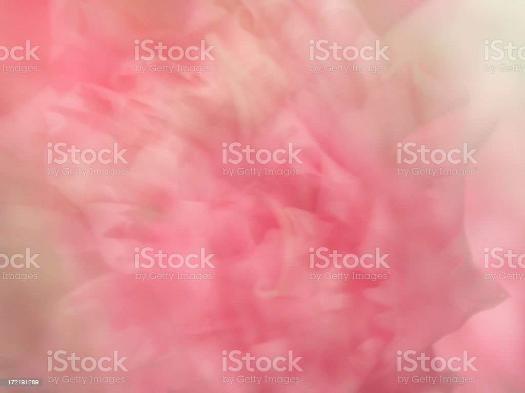 Carnation Background stock photo