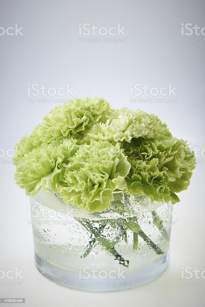 carnation royalty-free stock photo