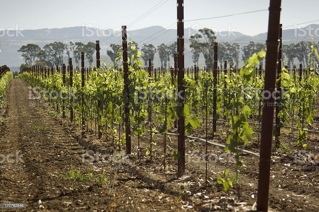 Carneros Valley Morning royalty-free stock photo