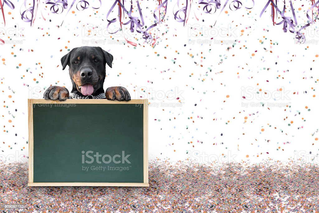 Carnival pet break time stock photo