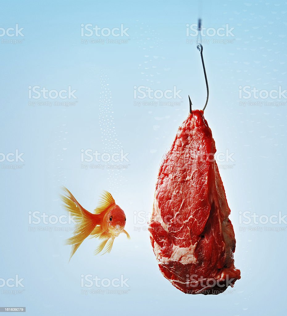 carnivorous goldfish stock photo