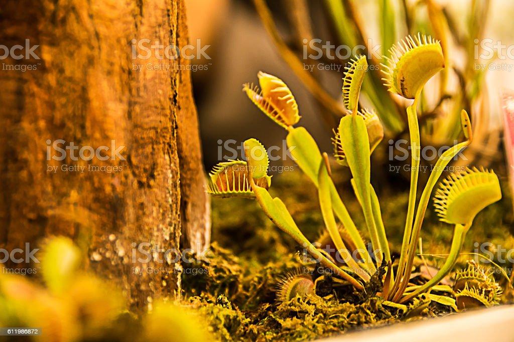 Carnivorous plants stock photo