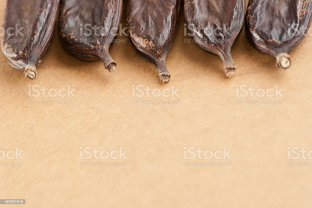 carob, Ceratonia siliqua royalty-free stock photo
