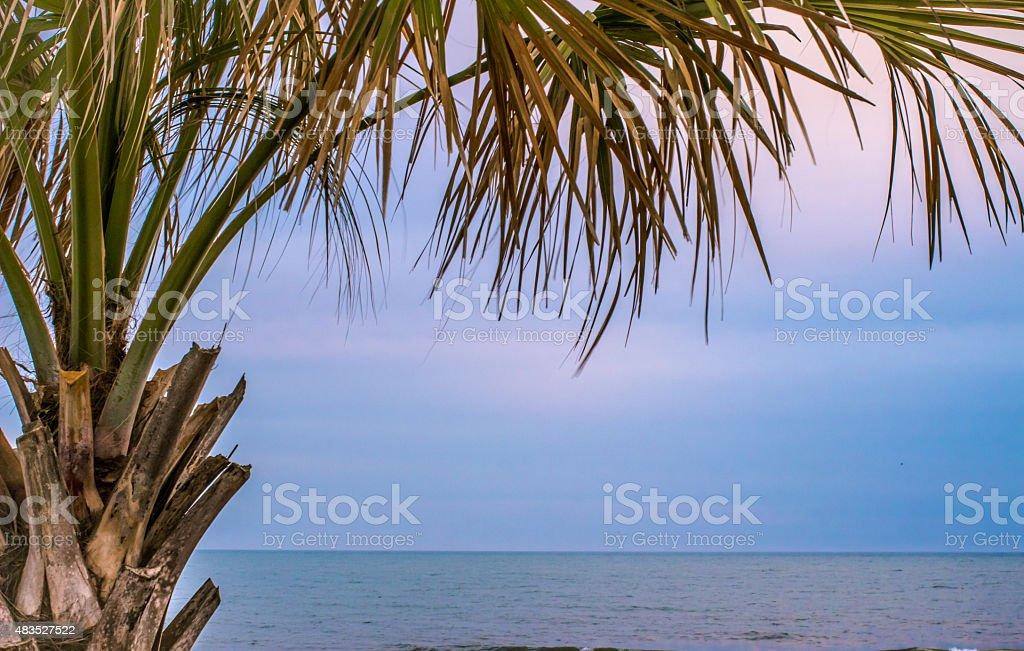 Carolina Palmetto Tree Framing An Atlantic Ocean Background stock photo