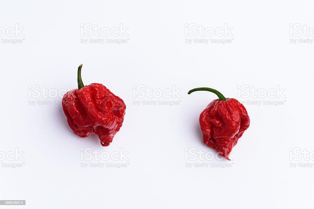 Carolina Reaper Chilli Pepper on white stock photo