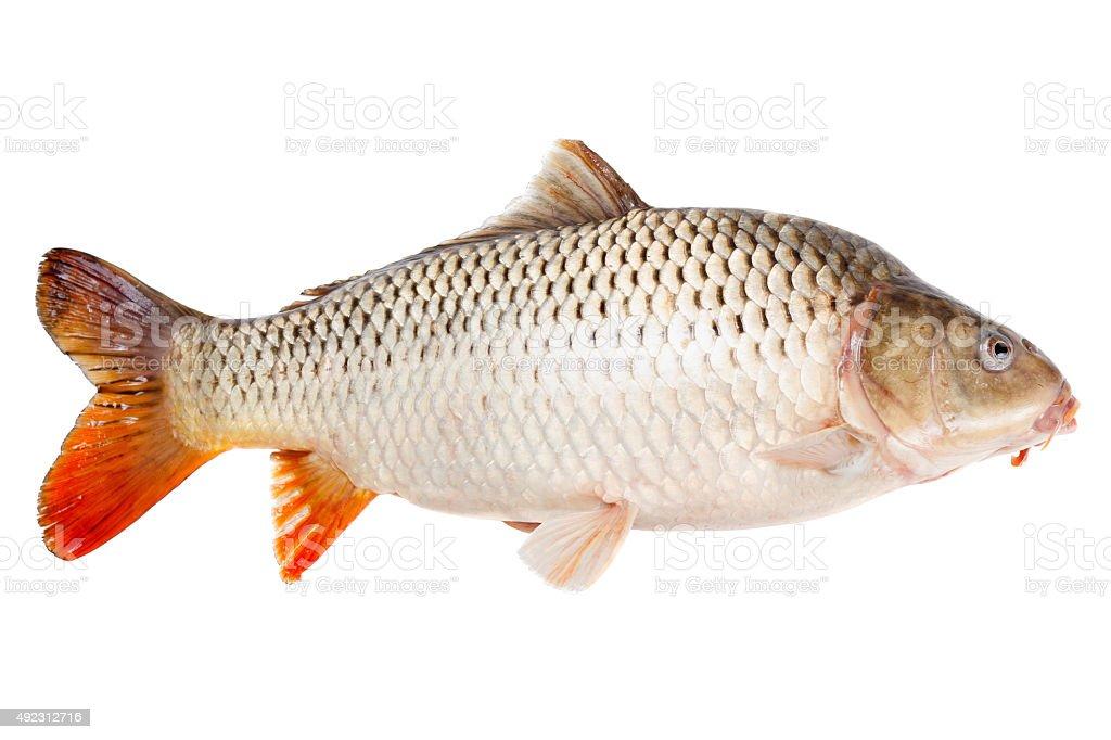 Carp fish half-face isolated on white background stock photo