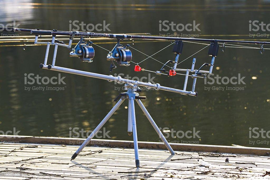 carp fishing royalty-free stock photo