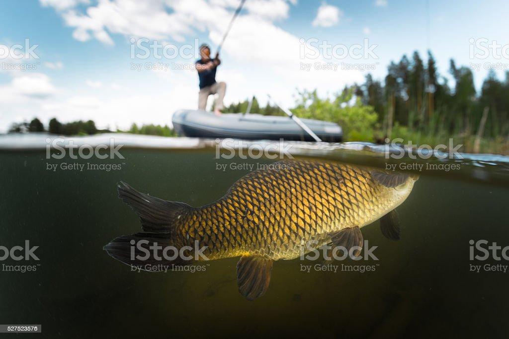 Carp fishing stock photo