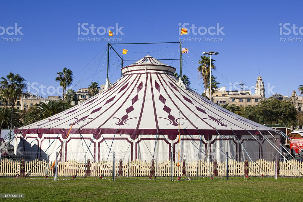 Carp of circus. royalty-free stock photo