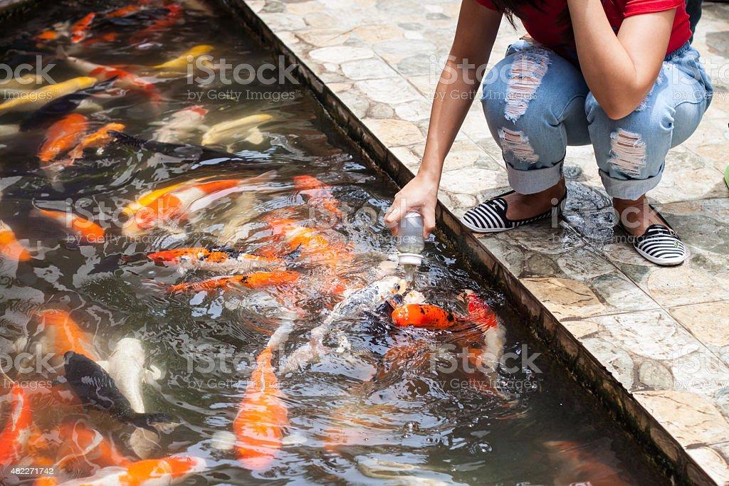 Carp or fancy carp,fish stock photo