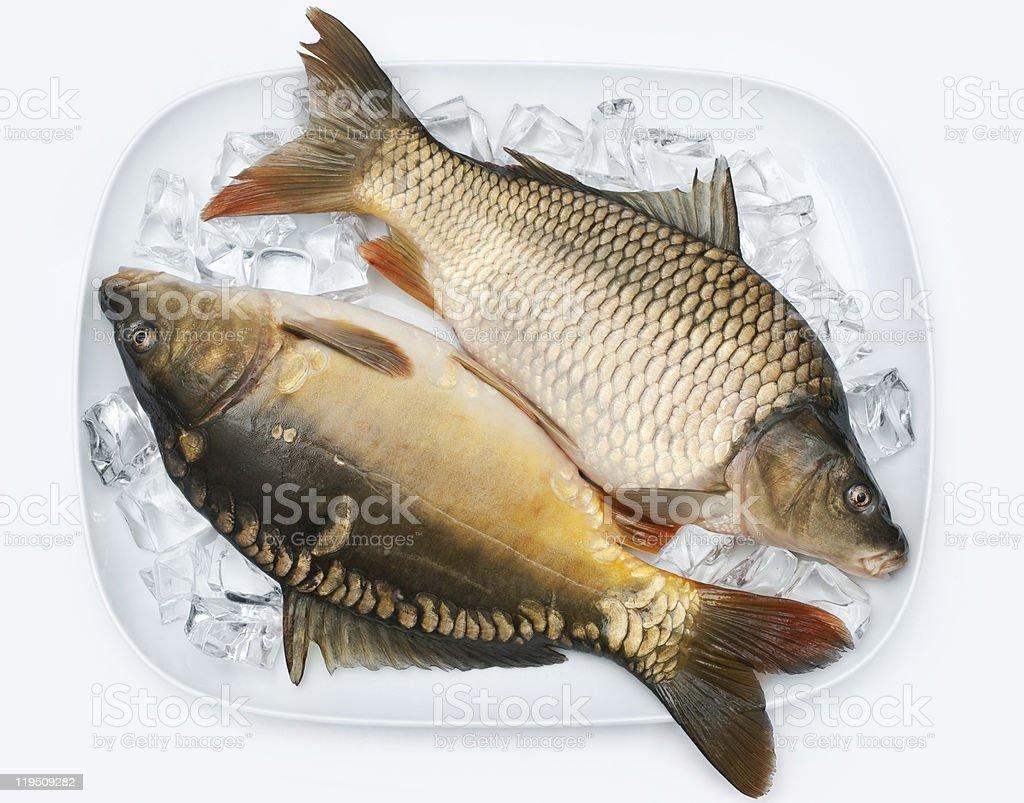 carp royalty-free stock photo