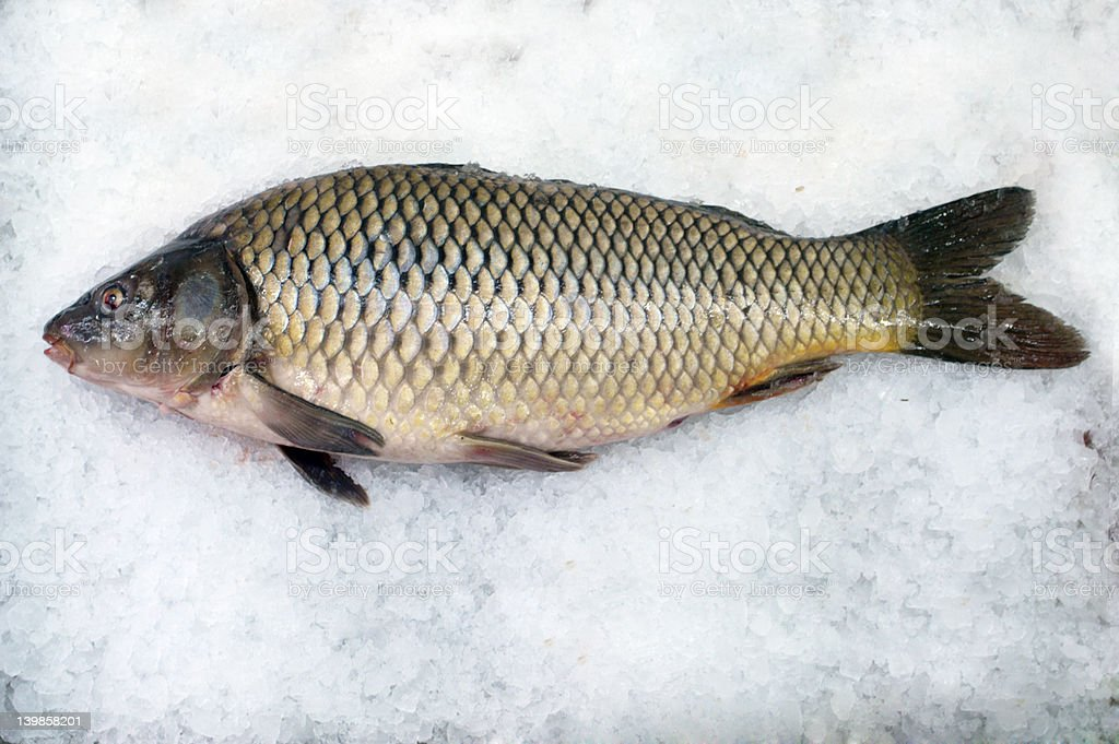 carp royalty-free stock photo