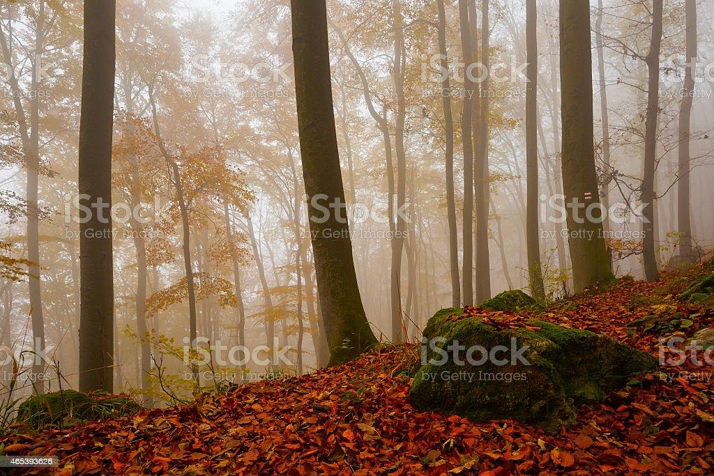 Carpathian beech forest, Slovakia. stock photo