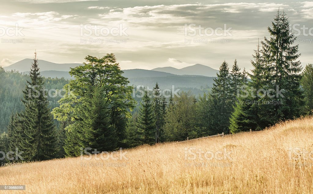 Carpathian meadow le matin photo libre de droits