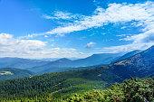 Carpathian Mountains, coniferous forest.