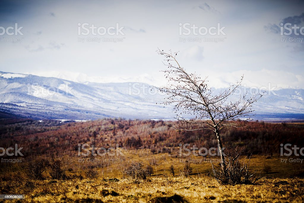 Carpatian Mountains royalty-free stock photo