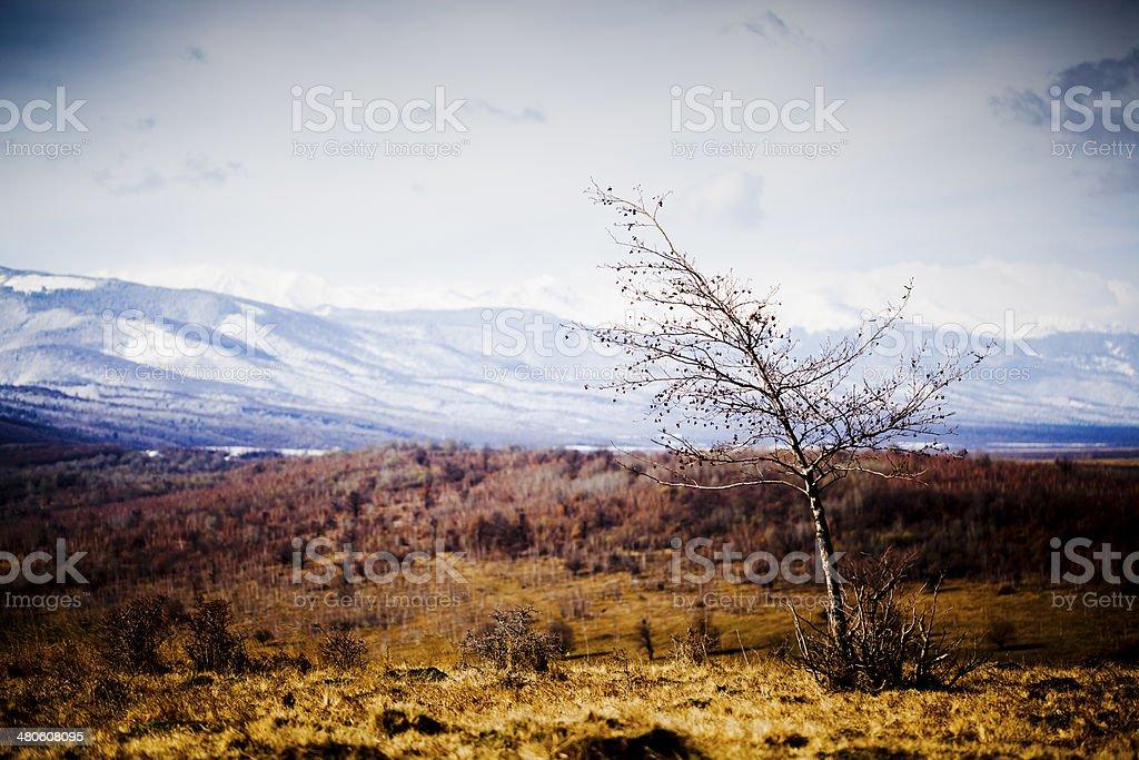 Carpatian Mountains stock photo