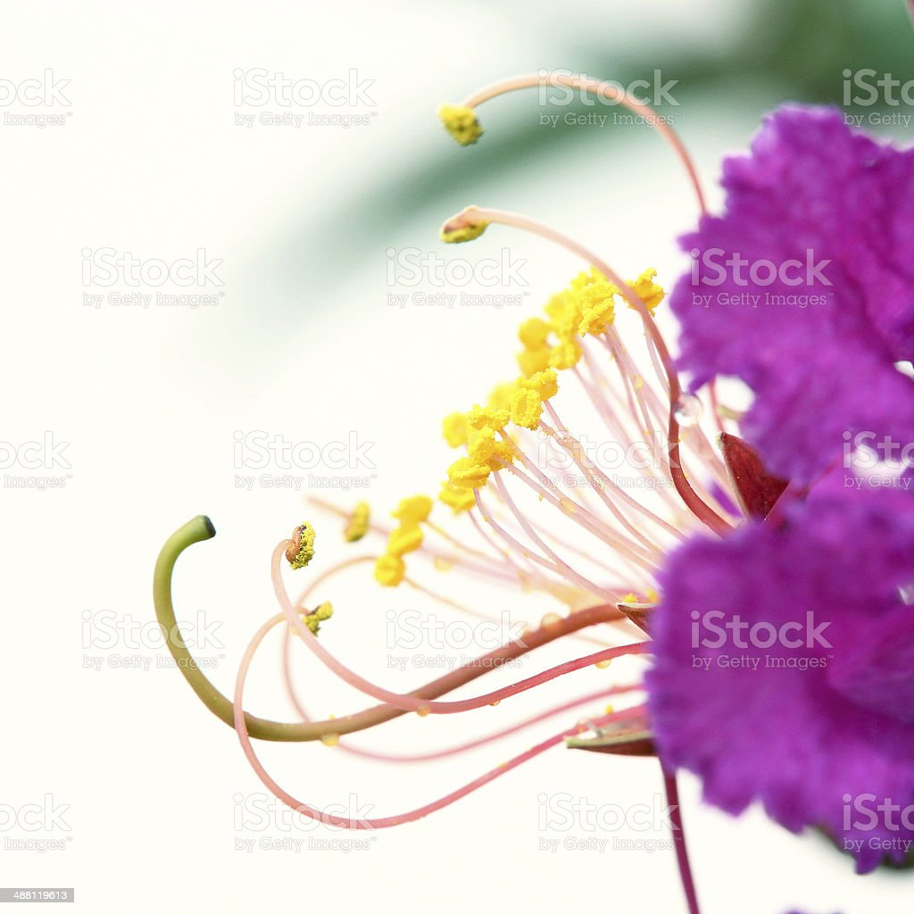 carpel flower on white background royalty-free stock photo