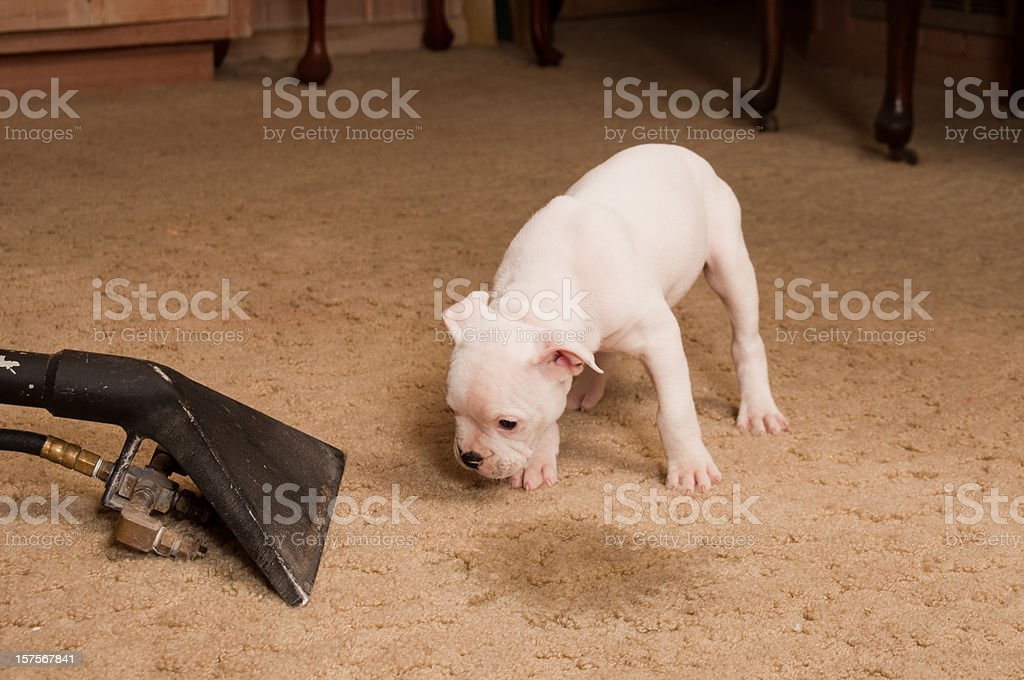 Carpet Cleaning Service royalty-free stock photo