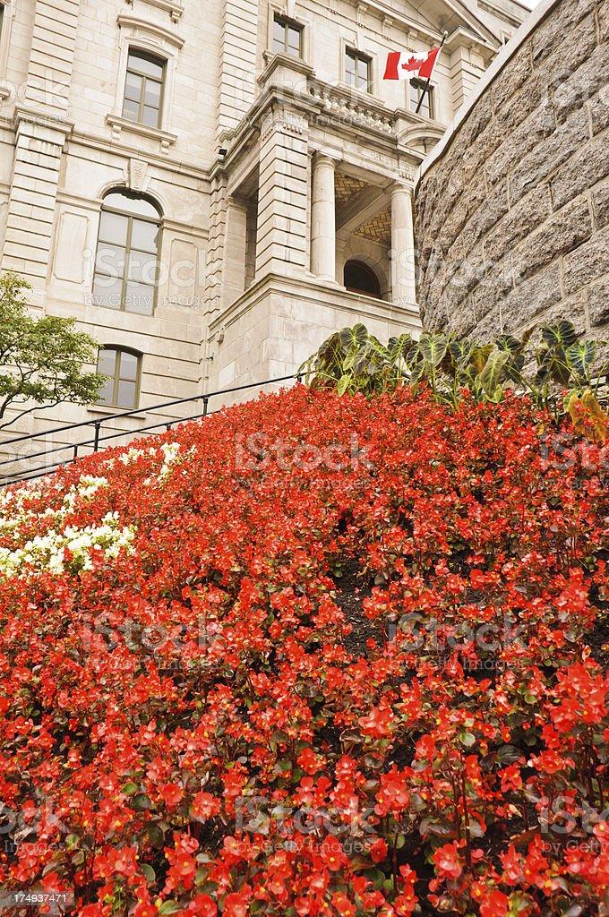Carpet of Begonias royalty-free stock photo