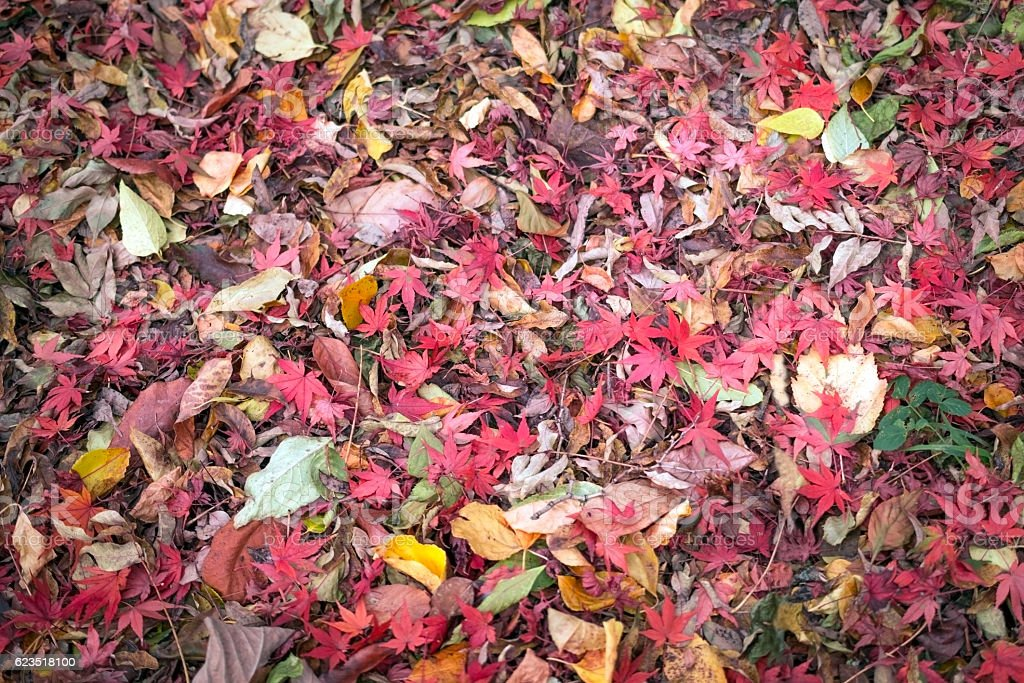 Carpet of dried leaves in fall stock photo