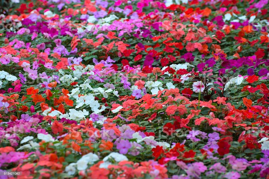 carpet of flowers stock photo