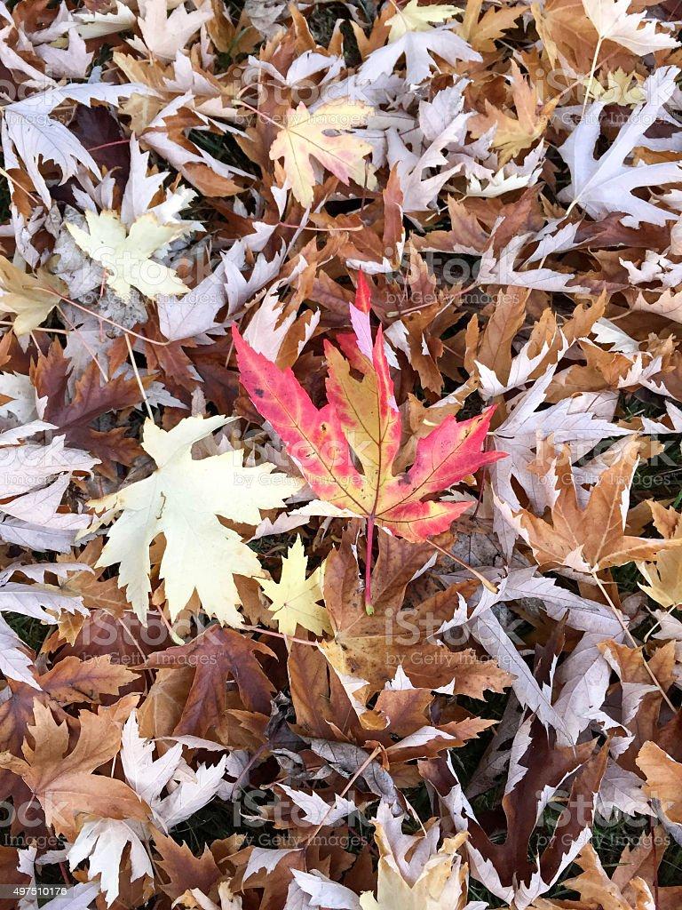 Carpet of leaves stock photo