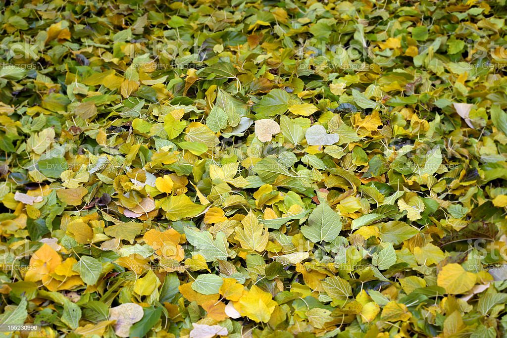 Carpet of Newly Fallen Leaves stock photo