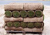 Carpet of turf