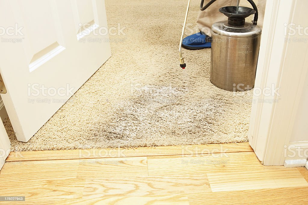 Carpet Stain Treatment with Sprayer at Doorway royalty-free stock photo