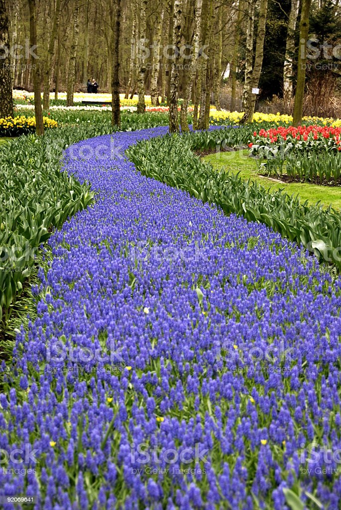 Carpeted with flowers royalty-free stock photo