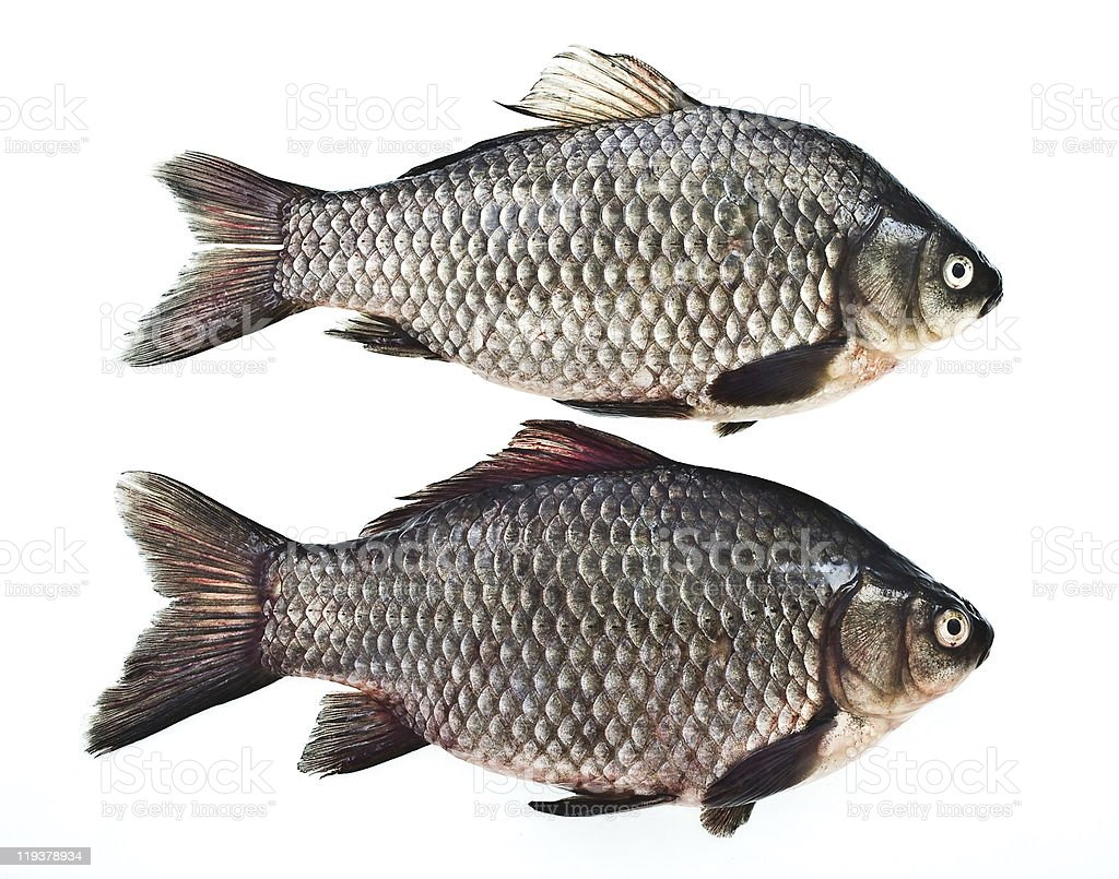 Carps stock photo