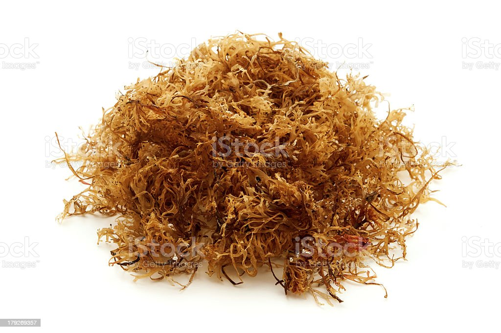 Carrageen moss stock photo