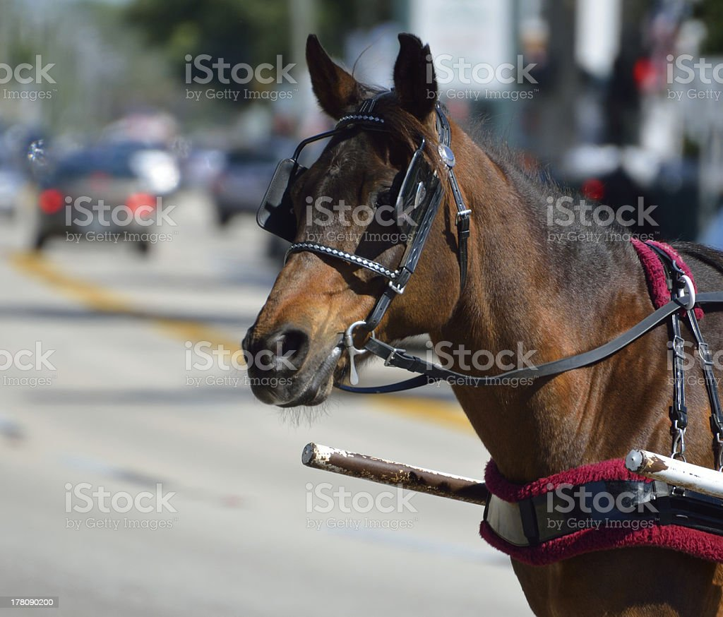 Carriage horse stock photo