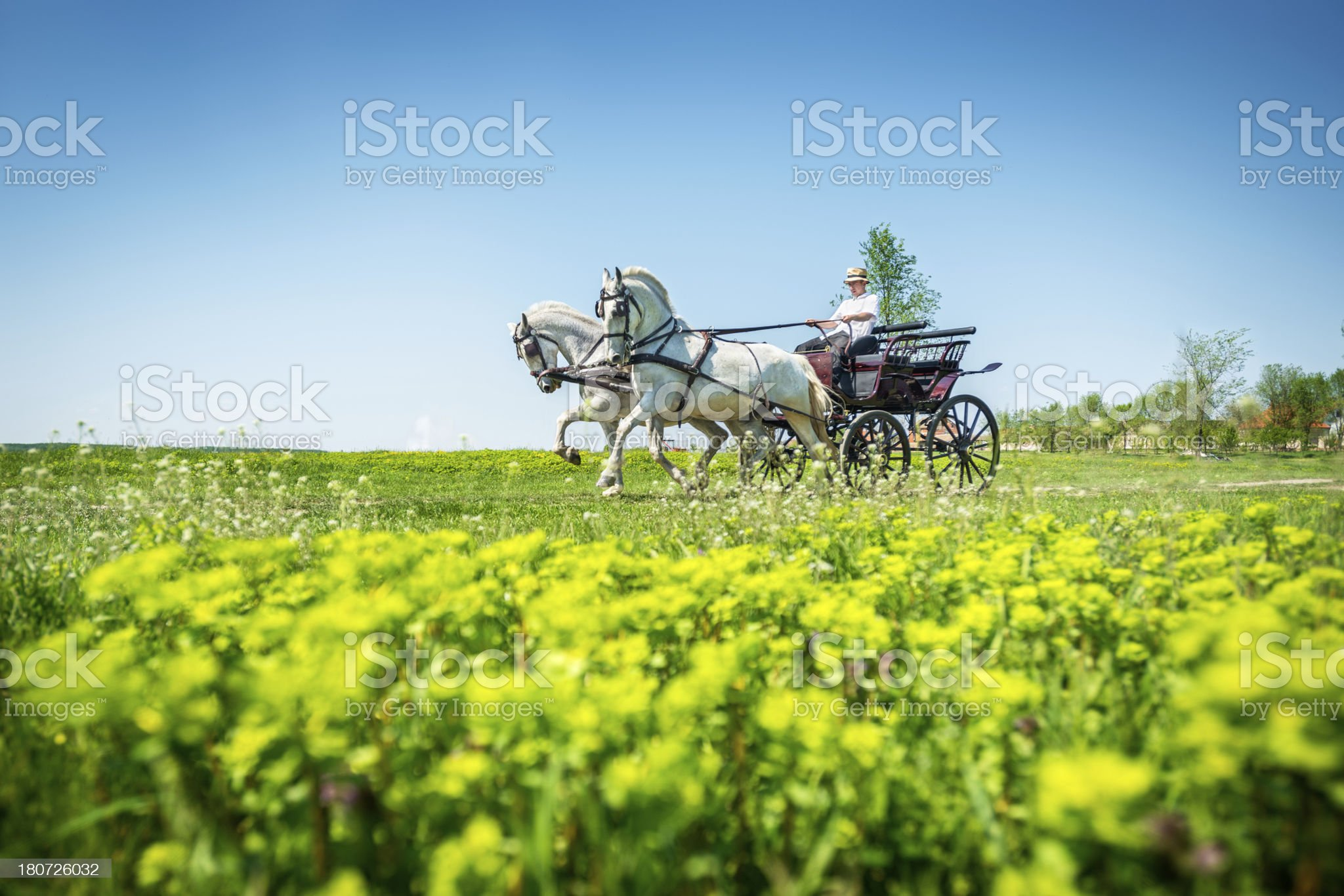 Carriage on the field royalty-free stock photo