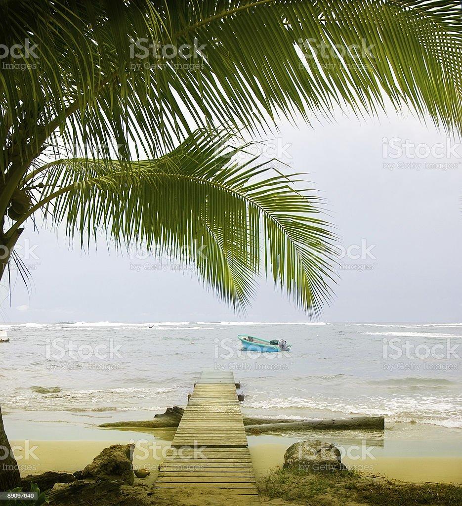 Carribean Palms royalty-free stock photo