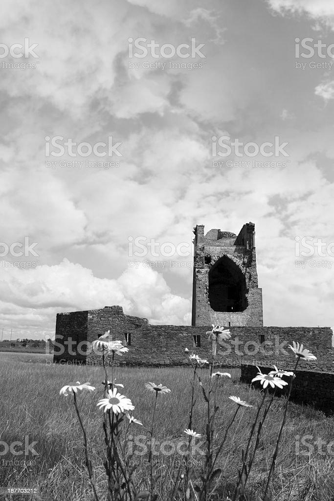 carrigafoyle castle tower with wild daisies stock photo