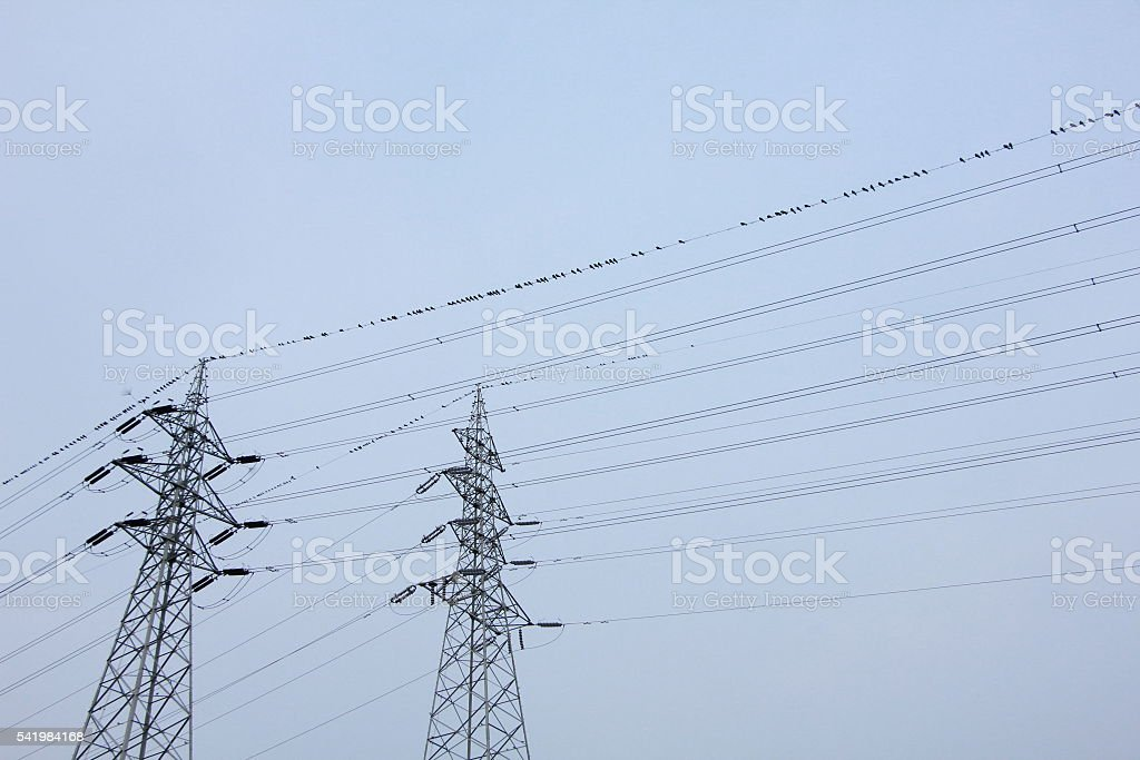Carrion crow and Utility pole stock photo