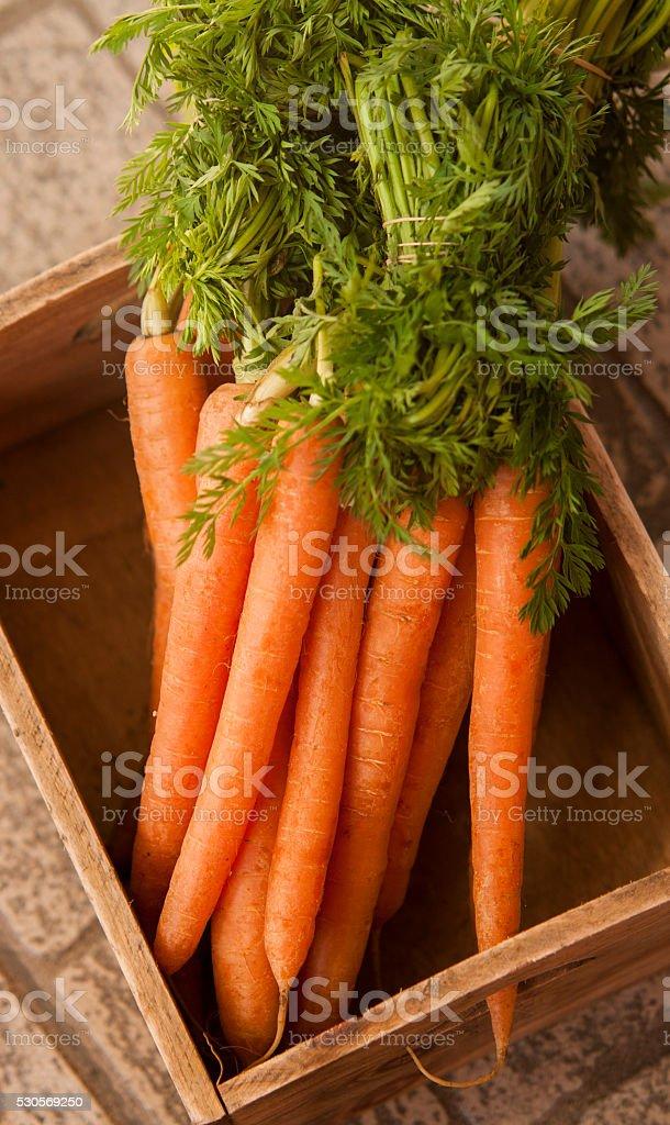 Carrot fresh organic stock photo