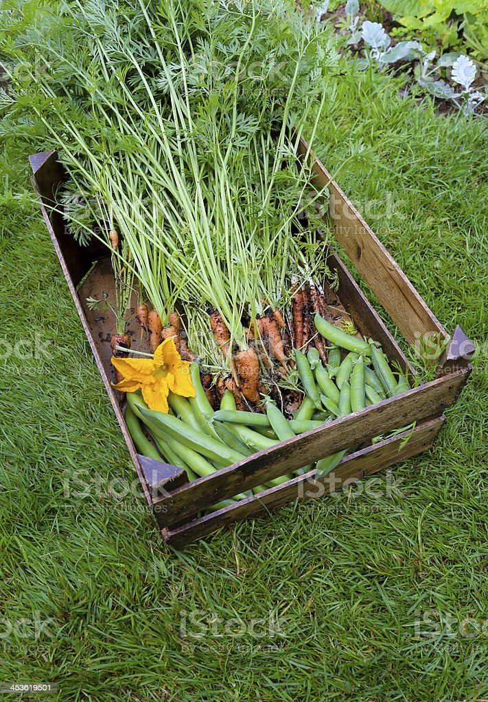 Carrots broadbean sweet peas and courgette flower royalty-free stock photo