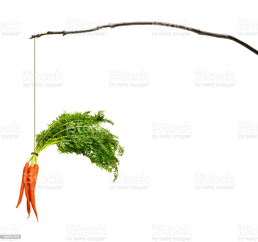 Carrots Dangling From A Stick stock photo