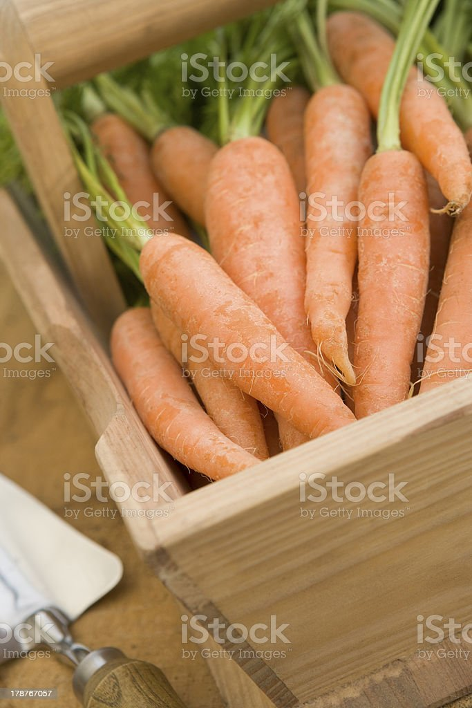 Carrots In A Wooden Trug royalty-free stock photo