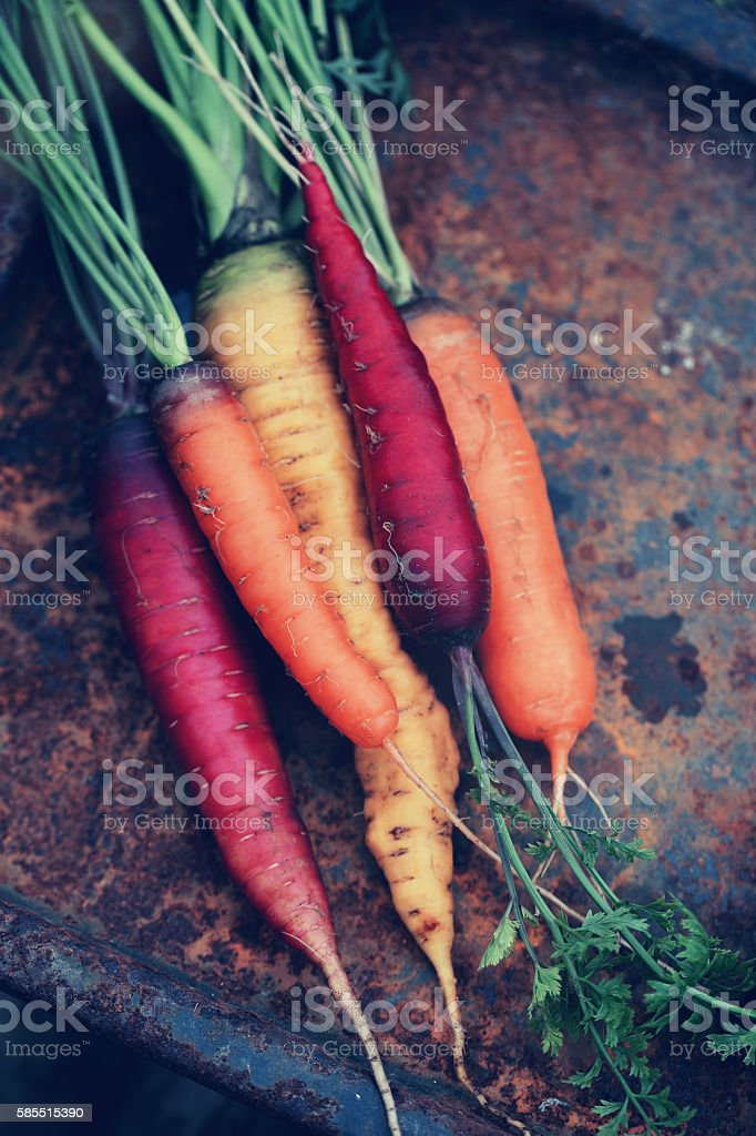 carrots on a metal stock photo
