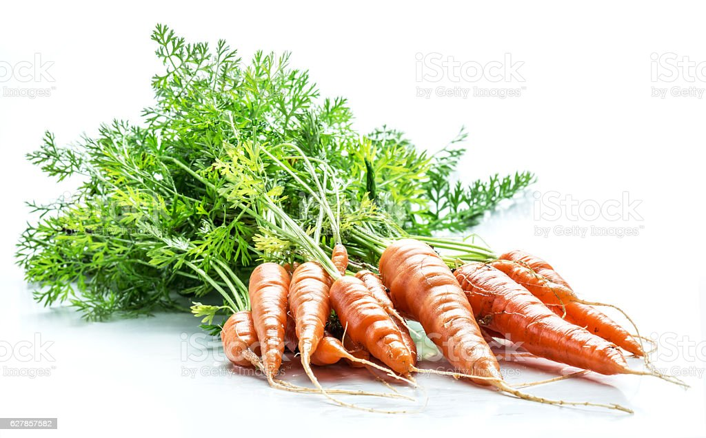 Carrots with greens. stock photo