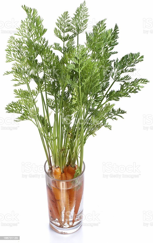Carrots with leaves standing in a glass of water. royalty-free stock photo