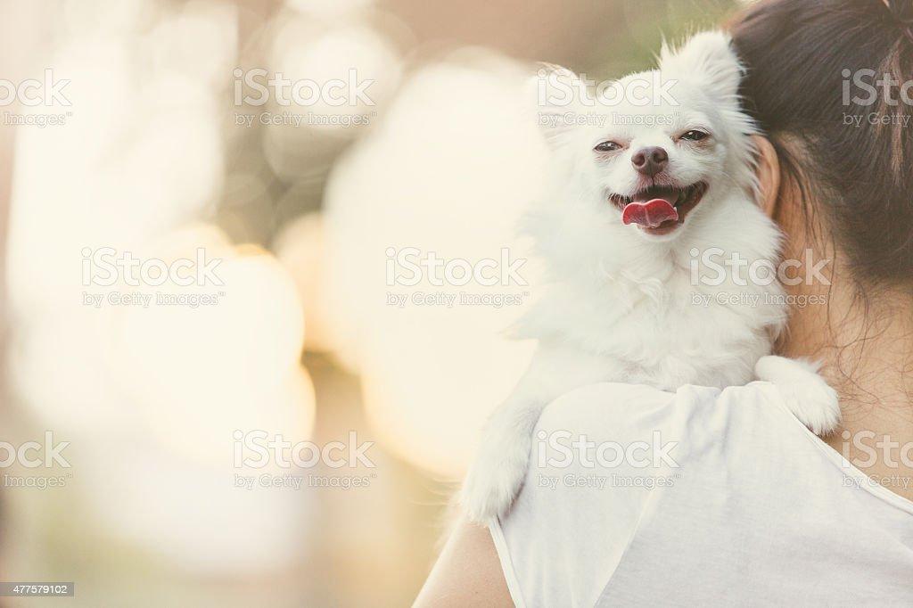 carry dog stock photo