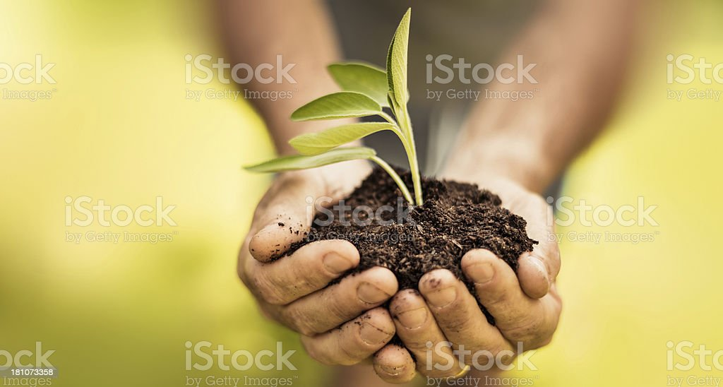 carry on the growth stock photo