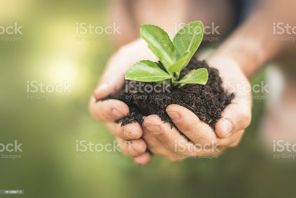 carry on the growth royalty-free stock photo
