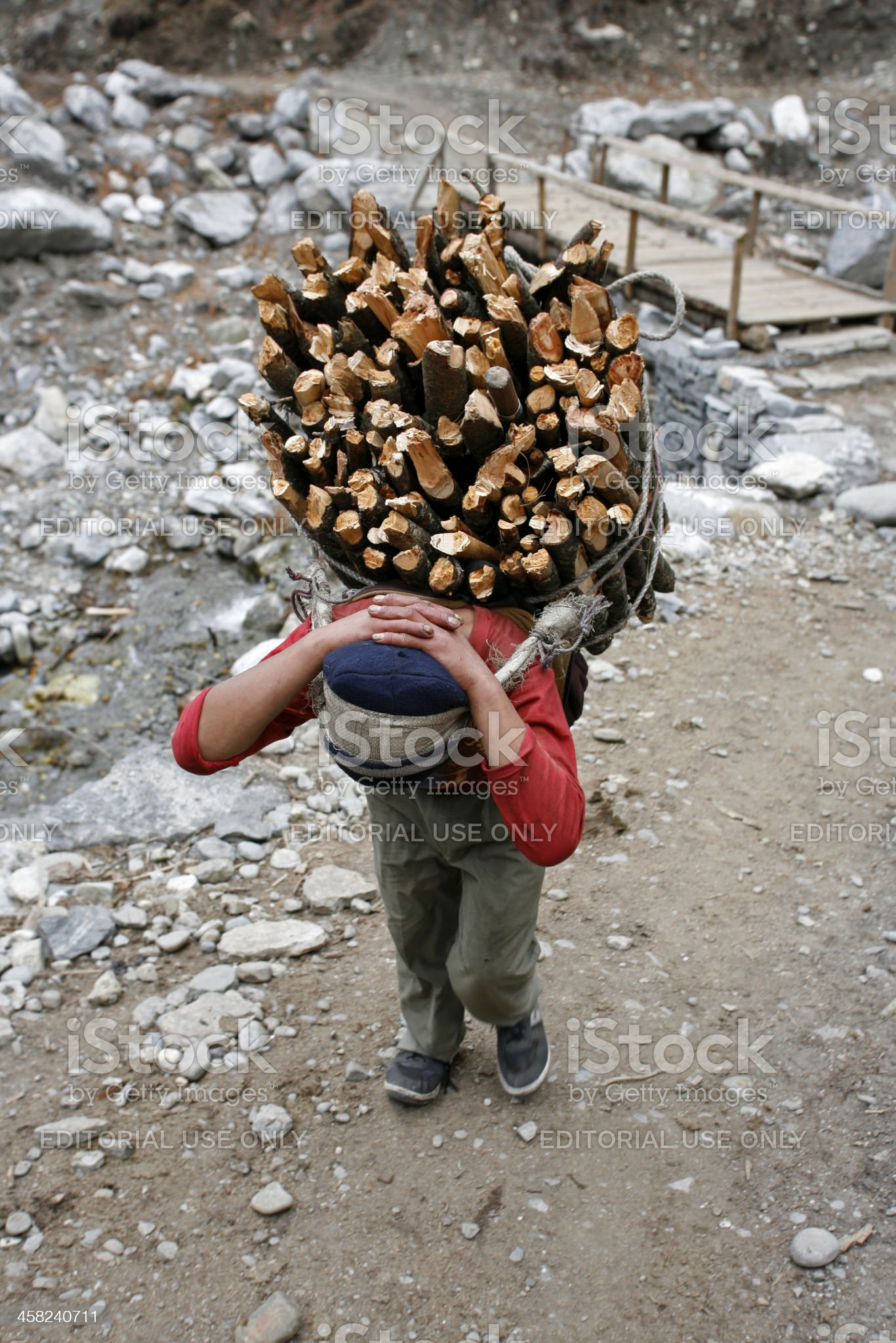 Carrying firewood royalty-free stock photo