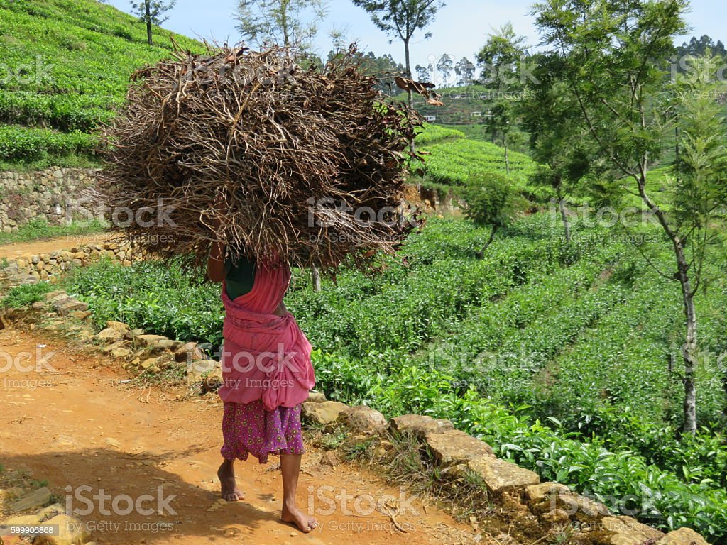 Carrying firewood stock photo